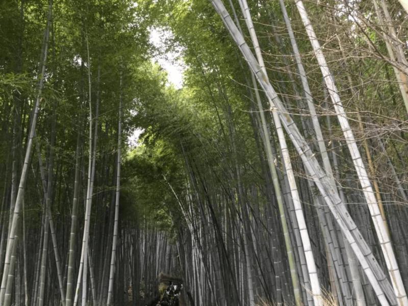 京都・奈良研修